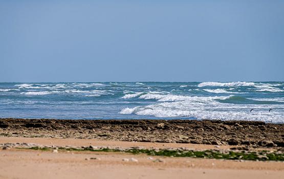 balade ile de ré bord de mer